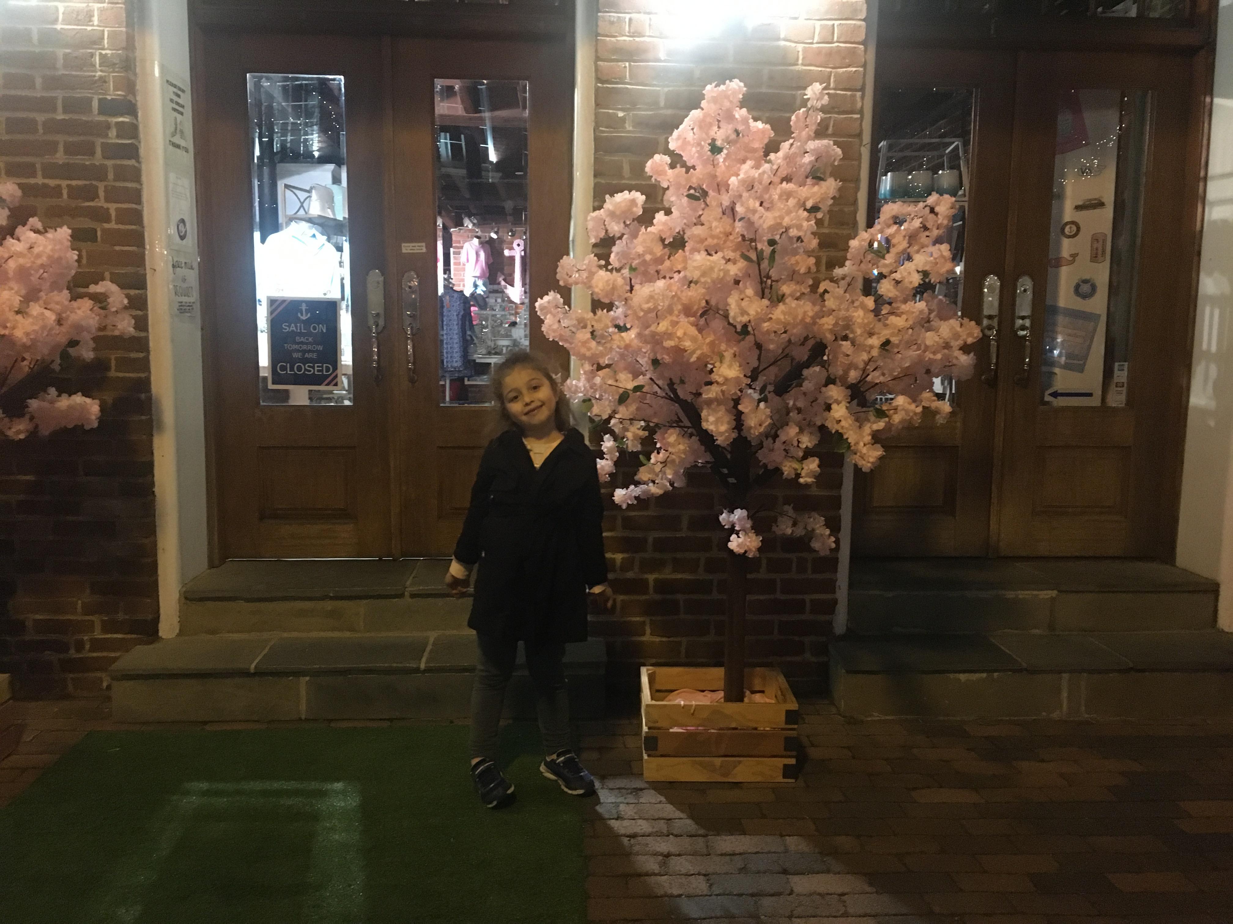 Cherry blossom in Alexandria