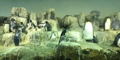 Central Park Zoo Penguins